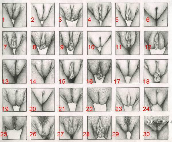 влагаліще секс порно фото