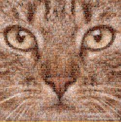 A close up of a kitten