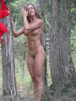 Cougar in forest
