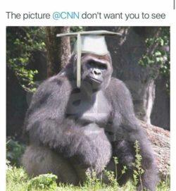 Valedictorian R.I.P. GorillaLivesMatter