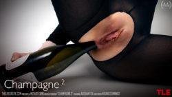 champagne – Areana Fox